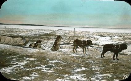 Dog_team_and_sled_Ile--la-Crosse_SK_1910_Christmas.jpg