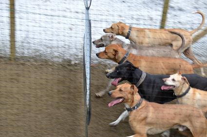 Hunden_elsker1.jpg
