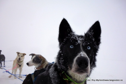 Vinterdanshund.JPG